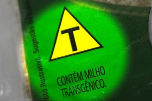 milho_transgênico